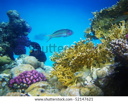 Underwater photo of a hard-coral reef - stock photo
