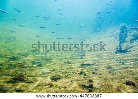 Underwater river landscape with algae and little fish - stock photo