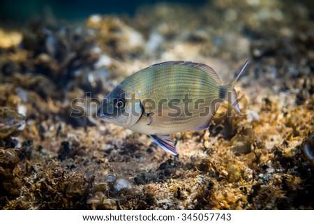 Underwater Scene. A Fish in it's Natural Habitat. - stock photo