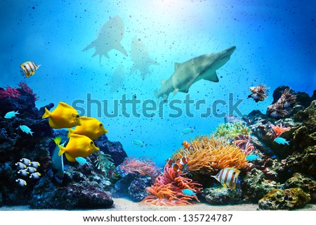 Underwater scene. Coral reef, colorful fish groups, sharks and sunny sky shining through clean ocean water. High res background - stock photo