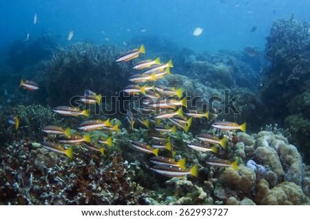 Underwater scene, Coron, Palawan, Philippines. - stock photo