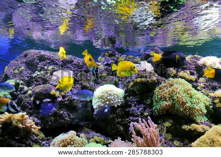 Underwater scene, showing different colorful fishes swimming - stock photo