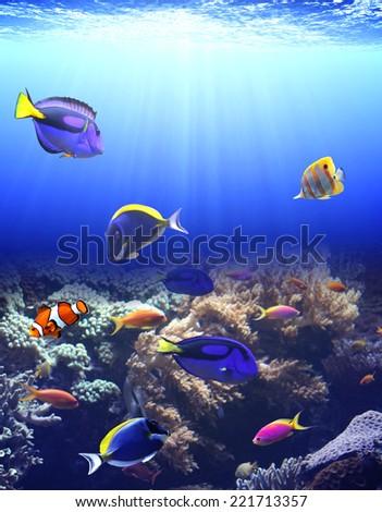 Underwater scene with beautiful tropical fish - stock photo