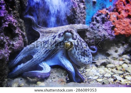 underwater scene with purple octopus and corals - stock photo