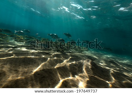 Underwater scenery in the Red Sea - stock photo