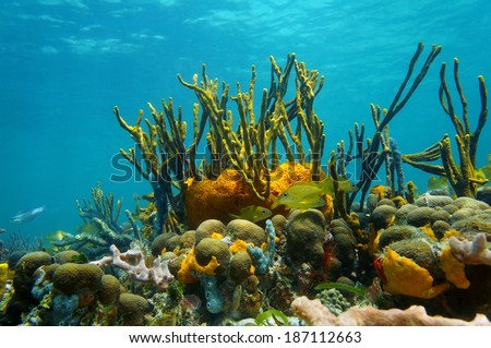 Underwater scenery with colorful marine life in a coral reef of the Caribbean sea, Mexico - stock photo