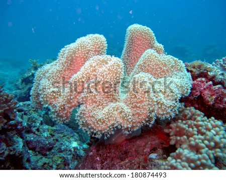 Underwater sea corals and plants      - stock photo