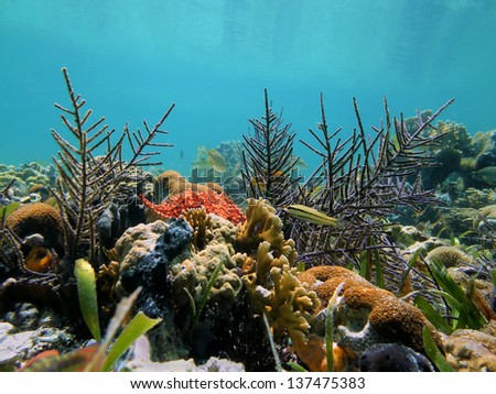 Underwater seabed in a coral garden of the Caribbean sea - stock photo