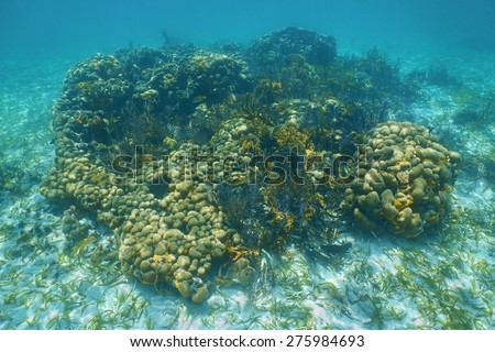 Underwater seascape over a small Caribbean coral reef, mostly great star coral - stock photo