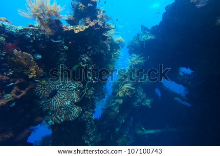Underwater shoot of a shipwreck with corals and fishes - stock photo