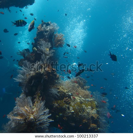 Underwater shoot of part of shipwreck and corals on it surface - stock photo