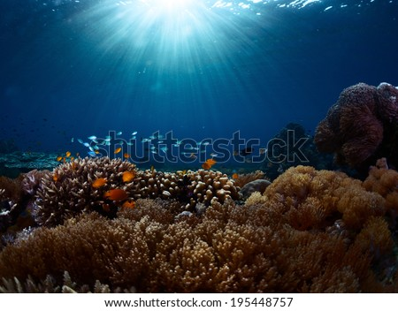 Underwater shot of the vivid coral reef in tropical sea. Bali Barat National Park, Indonesia - stock photo