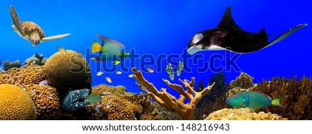 Underwater tropical reef panorama - stock photo