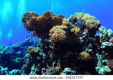 Underwater tropical sea view - stock photo