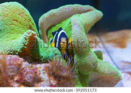 Underwater, Underwater World, corals and beautiful fish. Fish, fish, fish, fish, fish, fish, fish, fish, fish, fish, fish, fish, fish, fish, fish, fish, fish, fish, fish, fish, fish - stock photo