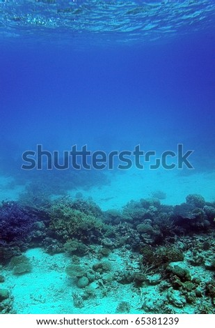 Underwater view of coral reef, Red Sea, Egypt - stock photo