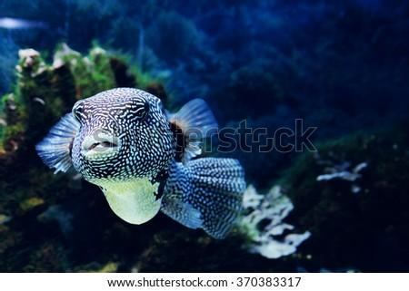 Underwater world - exotic fish in an aquarium - stock photo