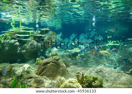 Underwater world, Hong Kong Ocean Park previous aquarium - stock photo
