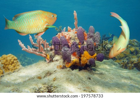 Underwater world with colorful tropical fish and sponges in the Caribbean sea - stock photo