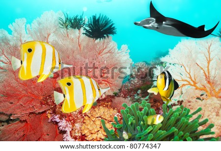 Underwater world with manta, coral reef and fishes - stock photo