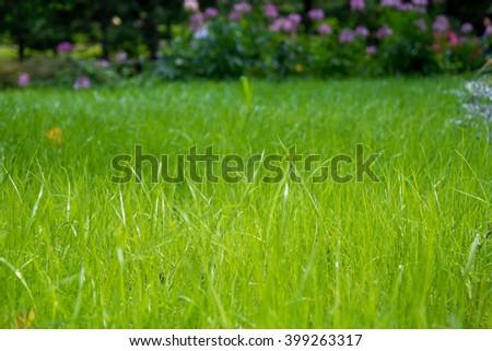 unfocused field of grass ,vintage tone, bokeh - stock photo