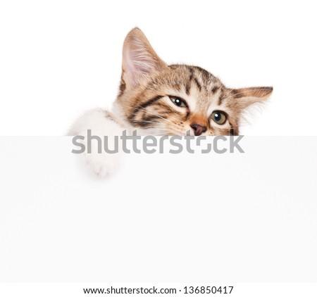 Unfortunate little kitten look from behind blank billboard over white background - stock photo