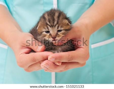 Unfortunate newborn kitten in hands of the veterinarian close-up - stock photo