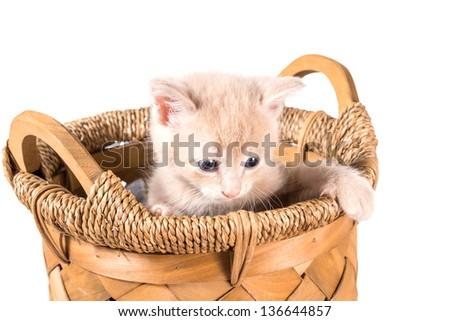 Unhappy peach color kitten in a basket - stock photo