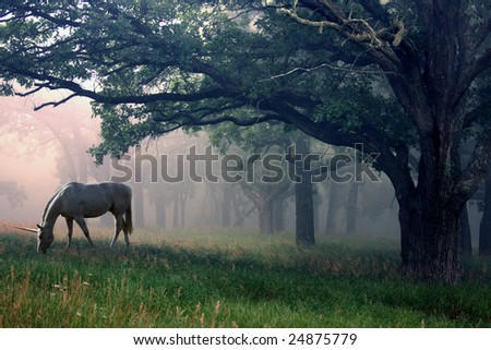 Unicorn standing in a mystical foggy woods. - stock photo