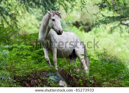 Unicorn standing in a mystical woods. - stock photo