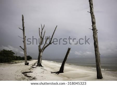 Unique Beach Landscape at Lovers Key on Florida Gulf Coast. - stock photo
