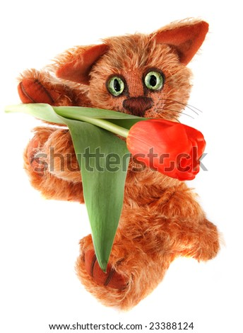 unique ginger Cat holding tulip flower in his paws on white background. Author's work with property release. - stock photo