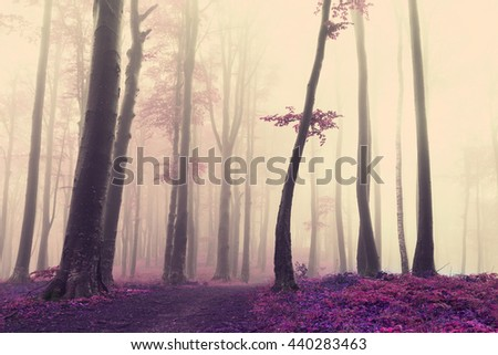 Unique tree in the forest - stock photo