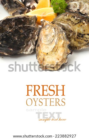 Unopened Oysters isolated on white - stock photo