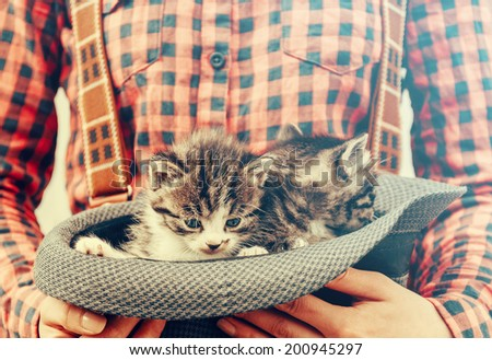 Unrecognizable girl holds hat with cute tabby kittens - stock photo