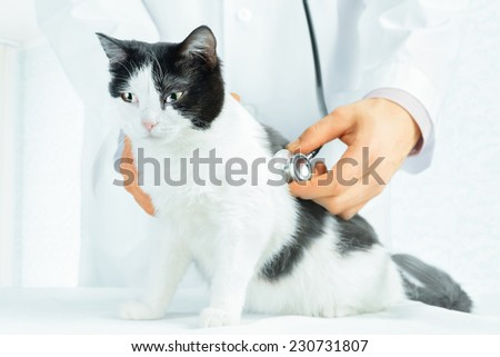 Unrecognizable male veterinarian listening a sick cat in hospital - stock photo