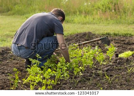 Unrecognizable Man Planting a Garden. - stock photo