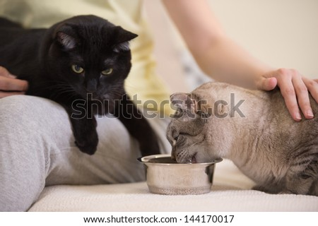 Unrecognizable woman feeding her two cats at home - stock photo