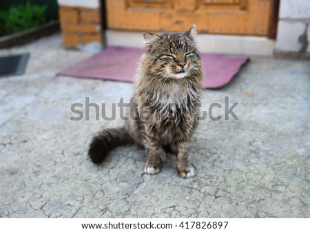 unruffled wild cat with closed eyes - stock photo