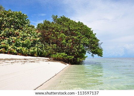 Unspoiled White Natural Beach With Mangrove And Sea Grape Trees On Woman Key, Florida Keys - stock photo