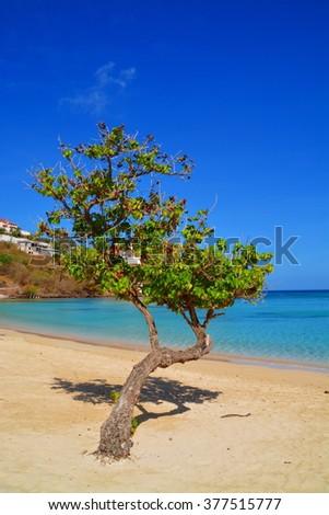 Untouched tropical beach in Grenada, Caribbean - stock photo