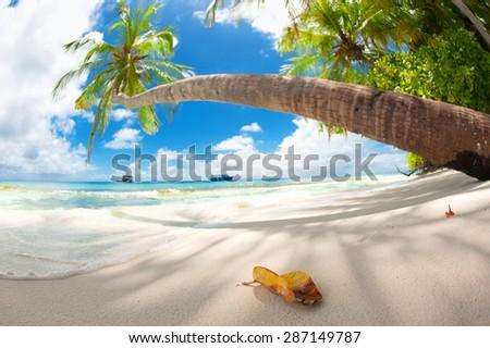 Untouched tropical beach in Maldives and Sri Lanka - stock photo