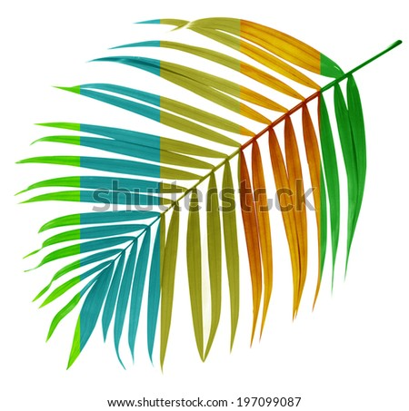 unusual leaf of palm tree on white background - stock photo