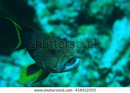 unusual saltwater fish on a coral reef - stock photo