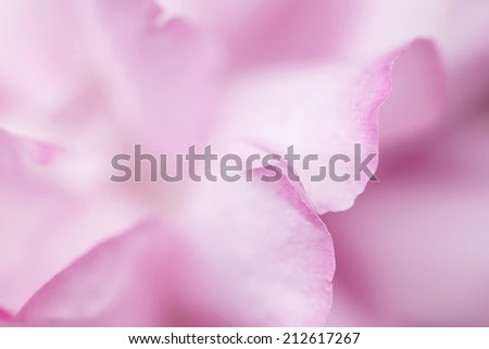 Unusual tender abstract blurred flower petals background  - stock photo