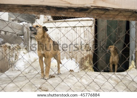 Unwanted dog in cage - stock photo