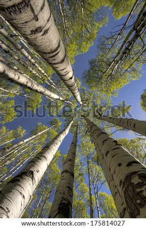 Up in the Treetops - stock photo