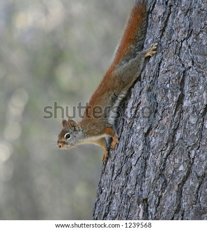 Upsude-down on a tree-trunk - stock photo