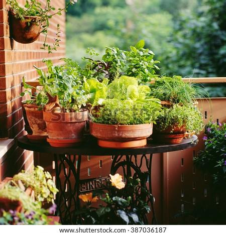 Urban Balcony garden - stock photo