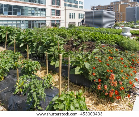 Urban Farm - Growing vegetables on roof of urban building - stock photo
